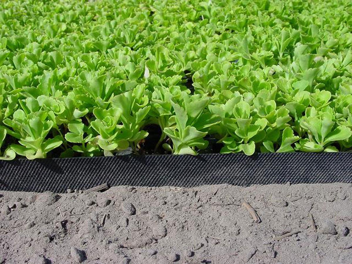 zapobiega przewracaniu sie roślin