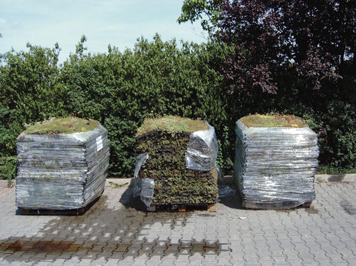 Gotowe do wysyłki palety z EkoSedum = EcoRaster + Sedum