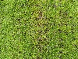 EcoGreen z kratkami trawnikowymi Ecoraster jest prawie w 100% zazieloną nawierzchnią jezdną.